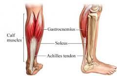 smerter i lægmuskel